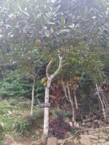 gn padang entrance5